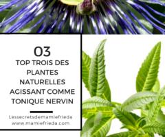 TOP TROIS (03) DES PLANTES NATURELLES AGISSANT COMME TONIQUE NERVIN